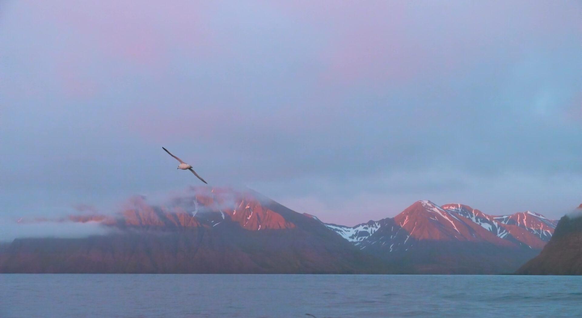 17. P1060661 dawn + bird