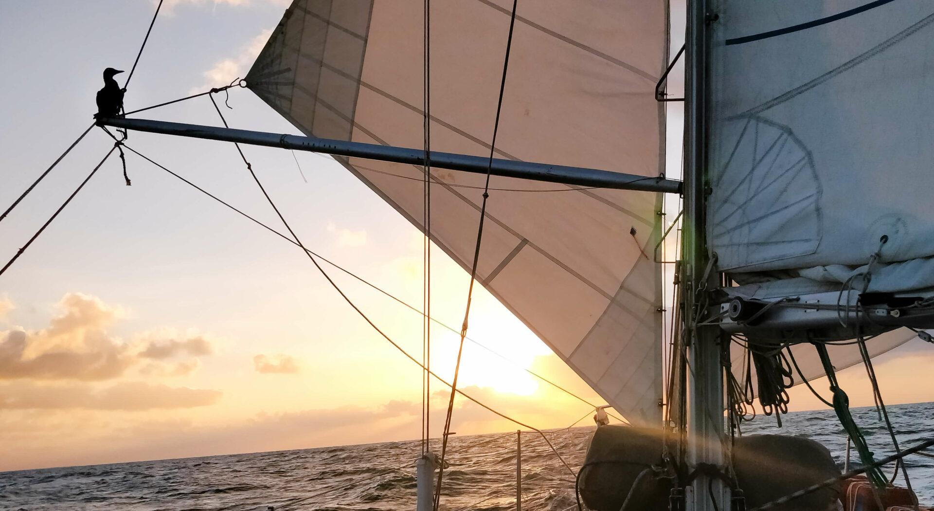 Arafurasjøen bød på drømmeforhold. Med full seilføring kunne vi sløre vestover. Fotoꓽ Michael Chahley
