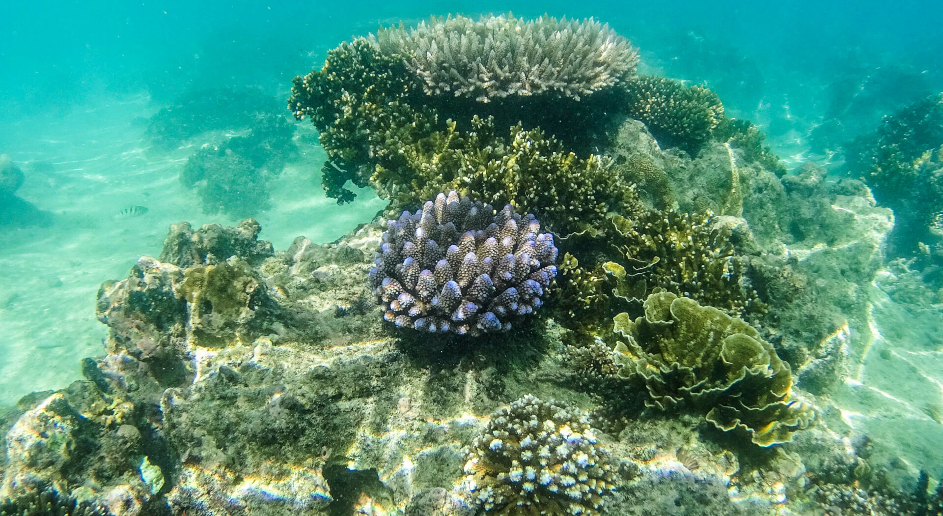 Epis undervannsverden har litt av hvert å by på .red2