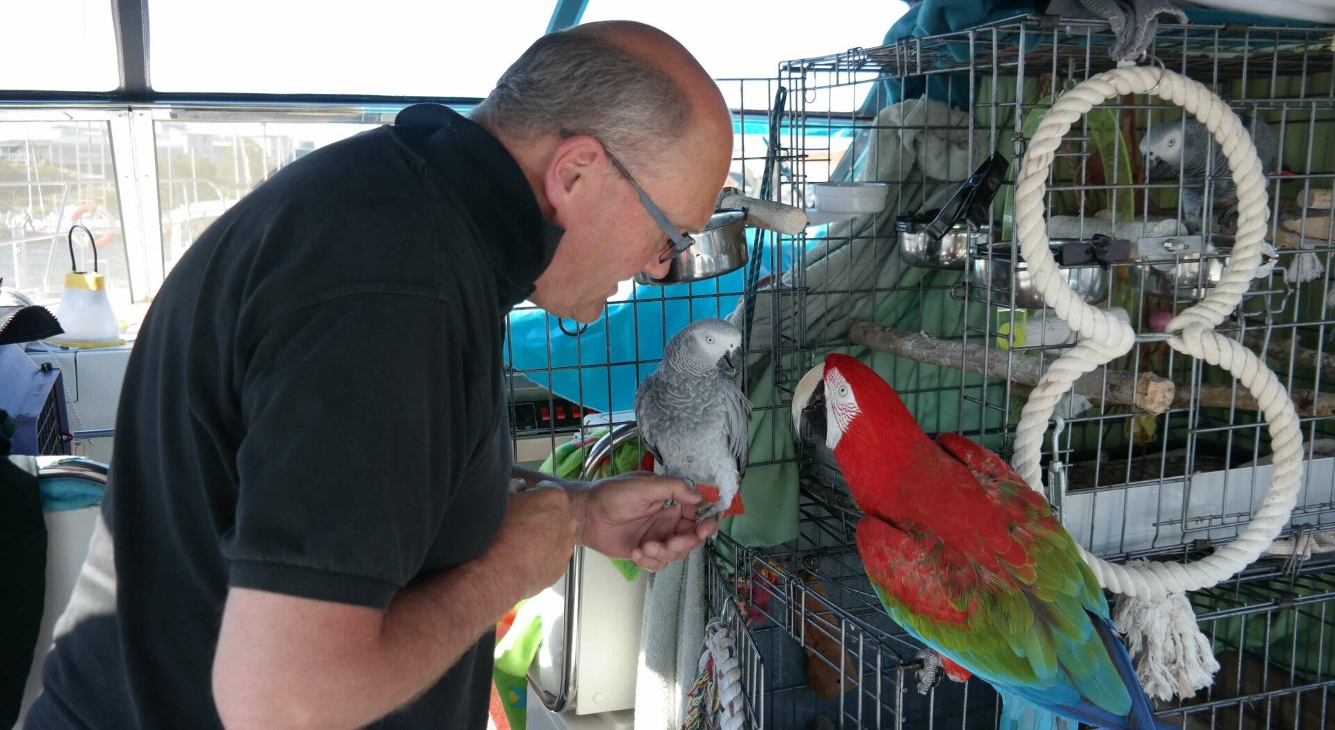På tur med papegøyer