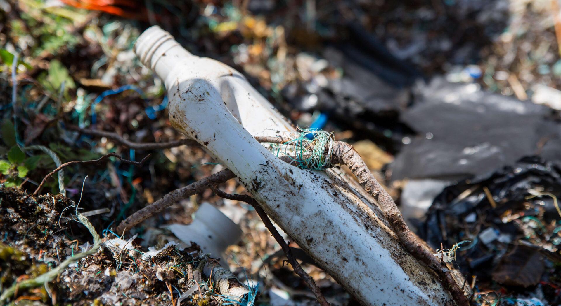 Rot vokst gjennom plastflaske
