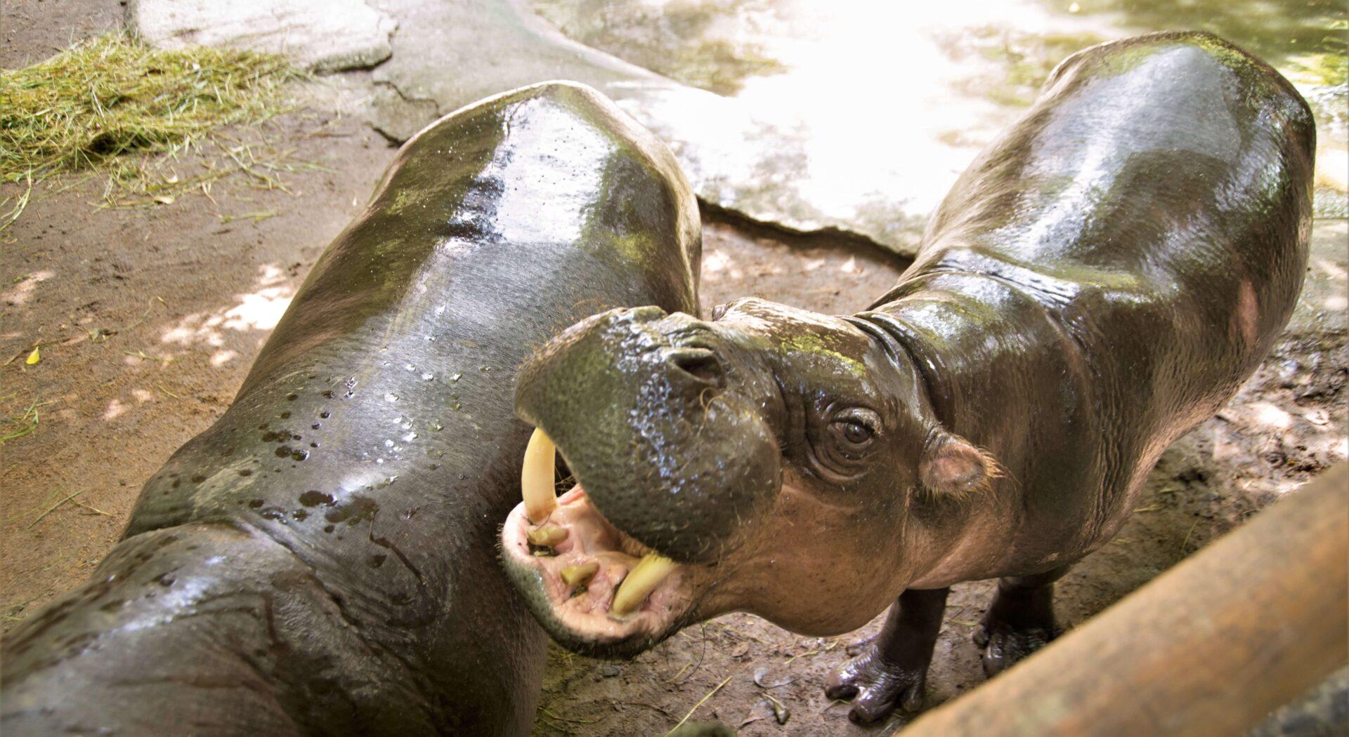 Da korona satte en stopper for seiling til Borneos regnskogparadis, kom regnskogen isteden til oss.